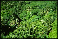 Tropical vegetation. Aunuu Island, American Samoa ( color)