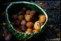 Coconuts contained in a basket made out of a single palm leaf. Tutuila, American Samoa