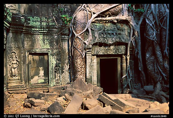 Roots of giant bayan tree encroaching on ruins in Ta Prom. Angkor, Cambodia
