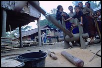 Preparation of rice in a small hamlet. Mekong river, Laos ( color)