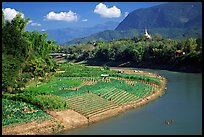 Fields on the banks of the Nam Khan river. Luang Prabang, Laos