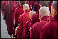 Shaven heads of monks, Mahagandayon Monastery. Amarapura, Myanmar ( color)
