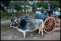 Man filling up water tank on ox cart. Pindaya, Myanmar ( color)