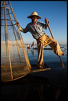 Intha fisherman prepares to release conical basket. Inle Lake, Myanmar ( color)