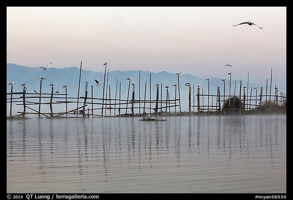 Fence, birds, and hill at dawn. Inle Lake, Myanmar (color)