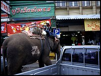 Elephant Parking. Lopburi, Thailand ( color)