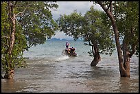 Mangroves and boat in distance, Ao Rai Leh East. Krabi Province, Thailand ( color)