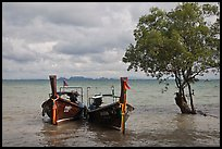 Boats and mangrove tree, Ao Railay East. Krabi Province, Thailand ( color)