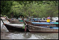 Long tail boats and trees, Ao Rai Leh East. Krabi Province, Thailand ( color)