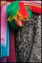 Colored ribbons on banyan tree, Ko Phi-Phi Don. Krabi Province, Thailand