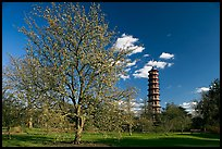 Great Pagoda and tree in bloom. Kew Royal Botanical Gardens,  London, England, United Kingdom (color)