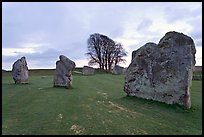 Megaliths and tree, Avebury, Wiltshire. England, United Kingdom