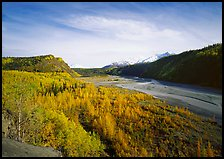 Matanuska River valley and aspens in fall color. Alaska, USA (color)