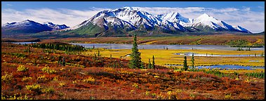 Tundra autumn scenery with snowy peaks. Alaska, USA (Panoramic color)
