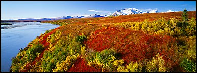 Tundra fall scenery with bright colors and river. Alaska, USA (Panoramic color)