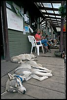 Dogs laying on porch of lodge. McCarthy, Alaska, USA ( color)