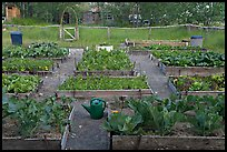 Vegetable garden. McCarthy, Alaska, USA ( color)
