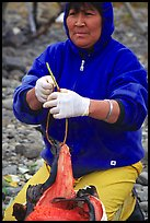 Inupiaq Eskimo woman getting fish ready to hang for drying, Ambler. North Western Alaska, USA (color)