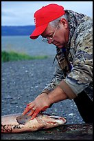 Fisherman preparing a salmon freshly caught in the Fishing Hole. Homer, Alaska, USA ( color)