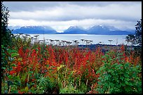 Ketchemak Bay and Kenai Mountains with a foreground of autunm grasses. Homer, Alaska, USA