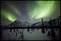 Aurora Borealis above Arctic Boreal Forest. Alaska, USA (color)
