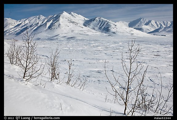 Shrubs and Arctic Mountains in winter. Alaska, USA