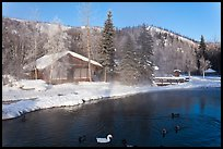 Cabins with swans and ducks in winter. Chena Hot Springs, Alaska, USA ( color)