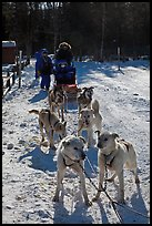 Huskies dogs and sled. Chena Hot Springs, Alaska, USA (color)