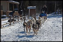 Huskies pulling sled as spectators watch. Chena Hot Springs, Alaska, USA (color)
