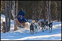 Musher and passengers pulled by dog team. Chena Hot Springs, Alaska, USA (color)