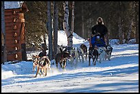 Dog mushing. Chena Hot Springs, Alaska, USA (color)
