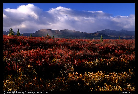 Tundra in fall colors  and mountains at sunset. Alaska, USA (color)
