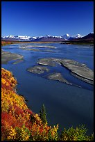 Wide Susitna River and fall colors on the tundra. Alaska, USA ( color)