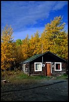 Log cabin and trees in fall color. Alaska, USA ( color)