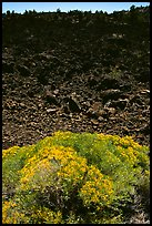 Sage and slope covered with lava, Lava Beds National Monument. California, USA ( color)