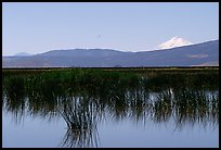 Mt Shasta seen from a marsh in the North. California, USA (color)