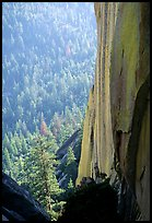Rock wall and forest, the Needles. Giant Sequoia National Monument, Sequoia National Forest, California, USA ( color)