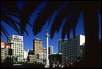 Union square framed by palm trees, afternoon. San Francisco, California, USA ( color)