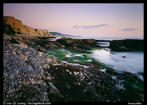 Mussel-covered rocks, seaweed and cliffs, sunset. Point Reyes National Seashore, California, USA