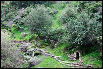 Pathway and stairs, Alum Rock Park. San Jose, California, USA (color)