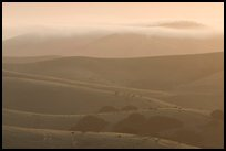 Rolling Hills and fog, sunrise. California, USA ( color)