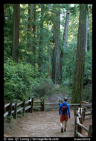 Hiker on trail. Big Basin Redwoods State Park,  California, USA