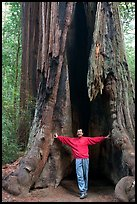 Visitor standing at the base of a hollowed-out redwood tree. Big Basin Redwoods State Park,  California, USA ( color)