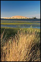 Summer grasses, Oneill Forebay, San Luis Reservoir State Recreation Area. California, USA