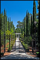 Gates in cypress trees in garden, Villa Montalvo. Saragota,  California, USA (color)