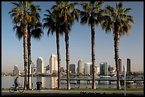 Bicyclist, palm trees and skyline, Coronado. San Diego, California, USA