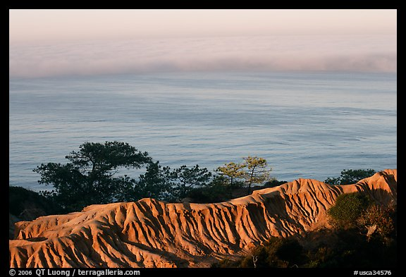 Eroded bluffs, ocean and fog, sunrise, Torrey Pines State Preserve. La Jolla, San Diego, California, USA