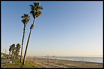 Tall palm trees, waterfront promenade, and beach. Huntington Beach, Orange County, California, USA ( color)