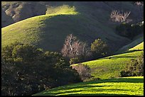 Pastures and hills. Morro Bay, USA