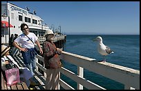 Tourists looking at a seagull on the wharf. Santa Cruz, California, USA
